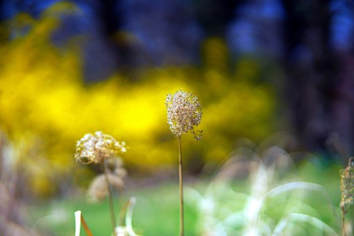 Grasses, Dried, Meadow, Withered, Spring