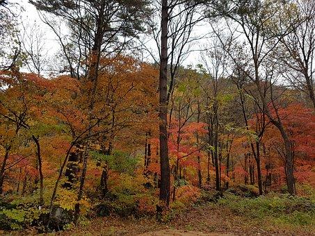 Autumn Leaves, Wood, Autumn