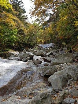 Valley, Autumn Leaves, Autumn