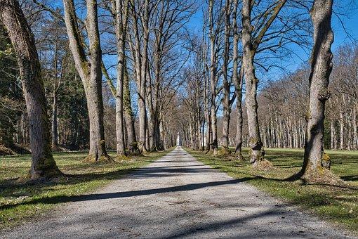 Road, Trees, Rural, Path, Avenue, Rural Road