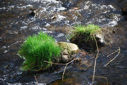 Bach, Stones, Grass, Water