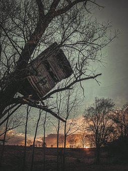 Tree House, Tree, Sunset, Branches, Bare Tree, Ruined