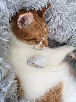 Cat, Mouse, Cute, Hunting, Toys, Funny