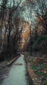 Trail, Hiking, Landscape, Path, Nature, Autumn, Forest