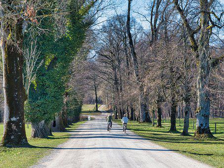 Road, Trees, Cyclists, Rural, Bicycles, Biking, Path