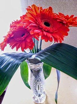 Gerbera, Flowers, Vase, Leaves, Transvaal Daisy, Plants