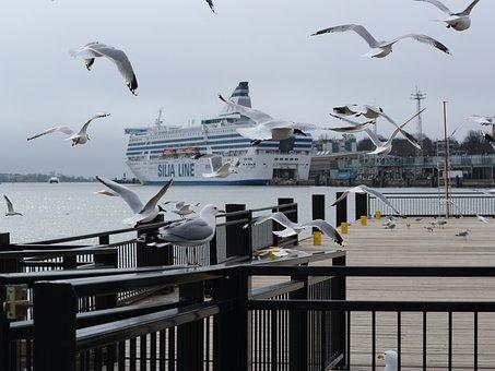 Gulls, Dock, Port, Birds, Seagulls, Animals, Flying