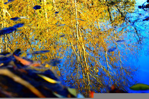 Reflection, Autumn, Water, Mirror, Color, Leaves