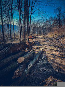 Lumber, Forest, Road, Woods, Timber