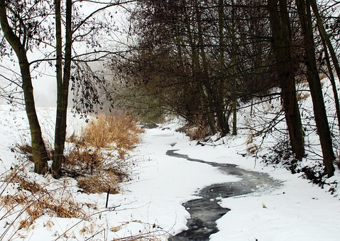 River, Forest, Winter, Snow, Fog, Frozen, Stream, Bach