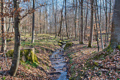 Stream, Forest, Trees, Bach, Creek, Waterway, Woods