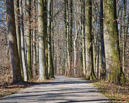 Road, Forest, Trees, Path, Forest Path, Trail, Woods