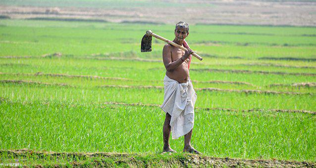Agriculture, Farmers, Agriculture In Bengal