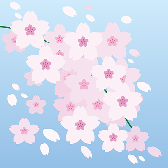 Cherry Blossom, Flowers, Spring, Pink, Nature, Plants