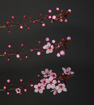 Plum Blossom, Flowers, Branch, Pink Flowers, Petals