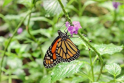 Butterfly, Butterflies, Garden, Green, Greenlife