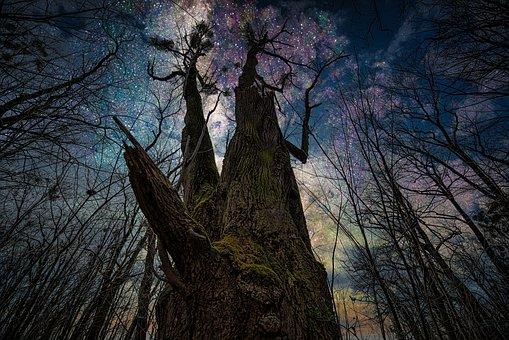 Tree, Trunk, Night Sky, Huge Tree, Oak, Mystical, Woods