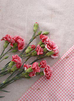 Carnation, Flower, Pink, Mother's Day