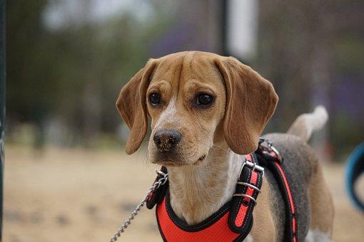 Dog, Pet, Animal, Domestic Dog, Canine, Mammal, Doggie