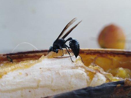 Wasp, Bee, Insect, Banana, Sweet, Food