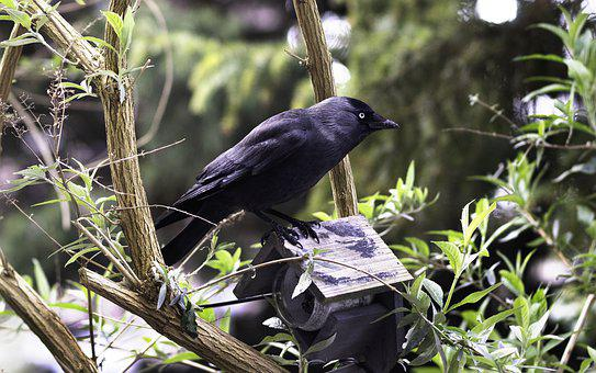 Crow, Jackdaw, Perched, Bird, Corvidae, Bird House