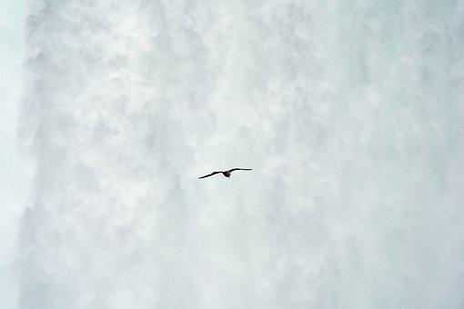 Niagara, Falls, Seagull, Flying, Wings, Bird, Animal