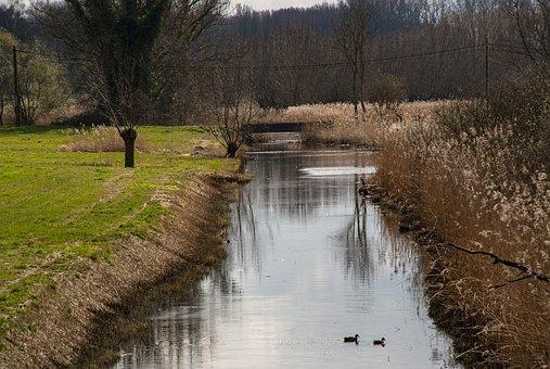 Waterway, Grass, Meadow, Ducks, Birds, Water