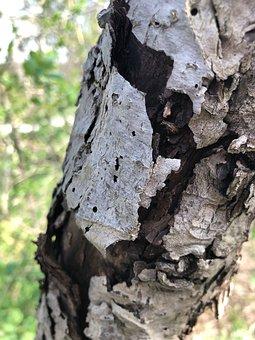 Bark, Tree, Log, Trunk, Texture, Nature, Gray