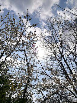 Trees, Branches, Leaves, Foliage, Perspective, Natura