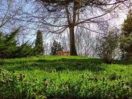 Park, Nature, Garden, Trees, Bench, Grass, Meadow