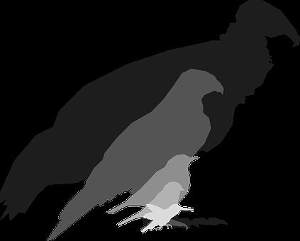 Birds, Animals, Silhouette, Vulture, Hawk, Thrush