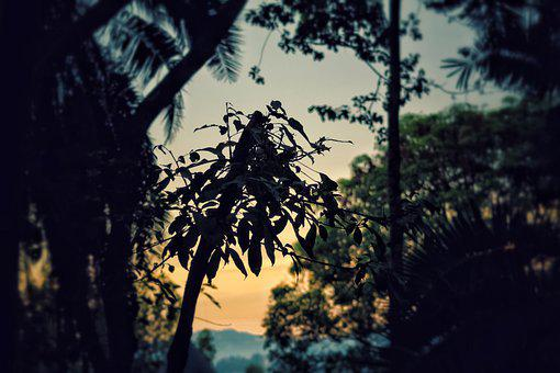Plants, Trees, Forest, Sunset, Sun, Down, Cool