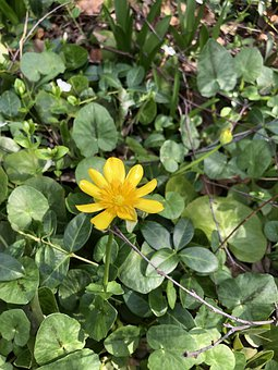 Weeds, Flower, Leaves, Foliage, Grass