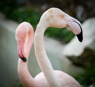 Flamingo, Animal, Zoo, Pink, Winged, Bird, Pen