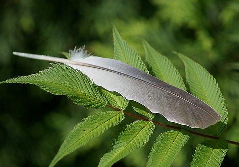 Pen, Feather Pigeon, Stosina, Green, Gray, Foliage