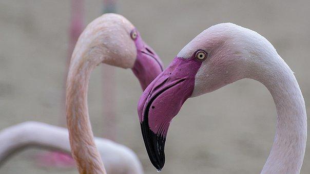 Flamingo, Zoo, Pink, Animal, Winged, Bird, Feathered