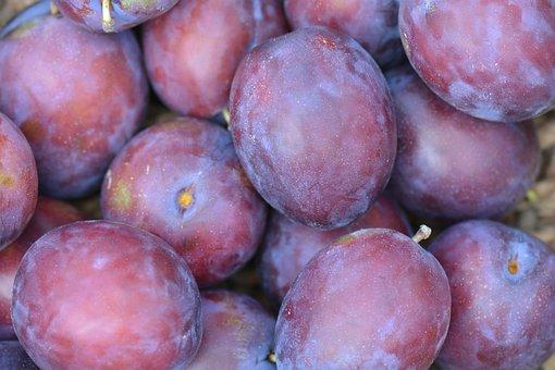 Plums, Fruit, President Plums, Purple