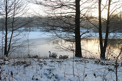 Natural, Winter, Snow, Denmark, Water Edge, Frost, Sky