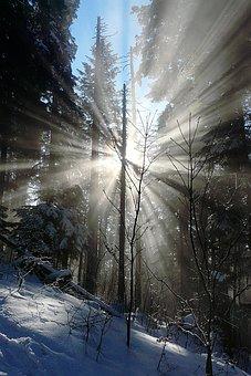 Winter Forest, Corona, Morning Sun, New Year