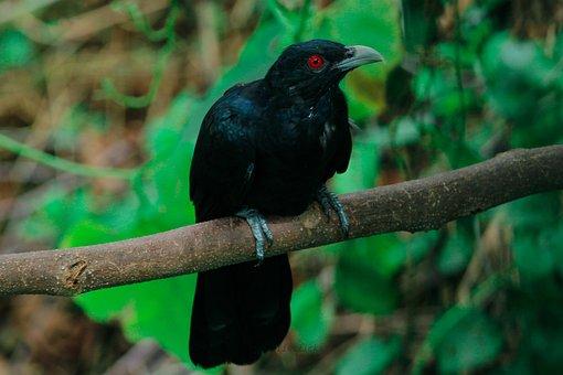 Birds, Nature, Tree, Animal, Wildlife, Sky