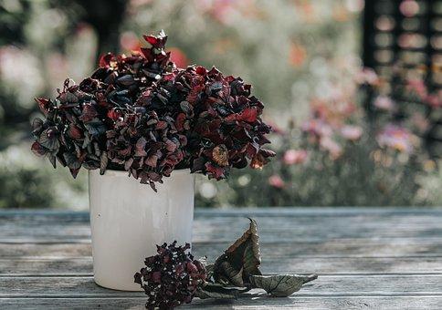 Flowers, Hydrangea, Pot, Vase, Dried Flower, Vintage