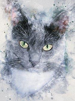 Titus, Cat, Kitten, Animal, Kitty, Pet, Fur, Whiskers