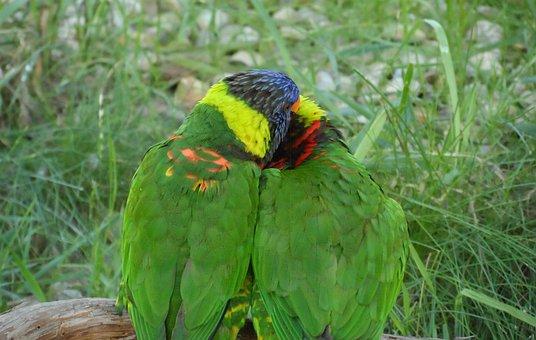 Birds, Love, Hug
