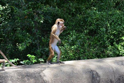 Monkey, Mom, Mother, Nature, Baby, Animal, Wildlife