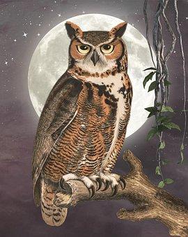 Owl, Branch, Perch, Wise, Wisdom, Bird, Bird Of Prey