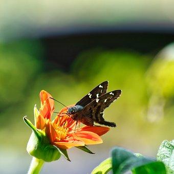 Butterfly, Flower, Spring, Summer, Nature, Flora
