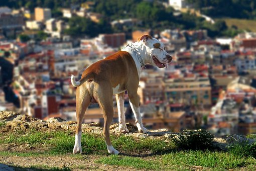 Dog, Can, Animal, Pets, Happy, Cute, Movement