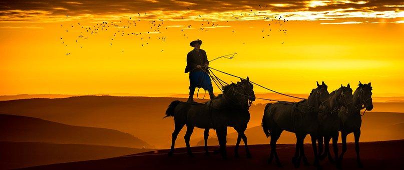 Cowboy, Horses, Sunset, Sunrise, Flock Of Birds, Animal