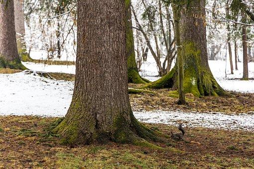 Squirrel, Chipmunk, Park, Snow, Winter