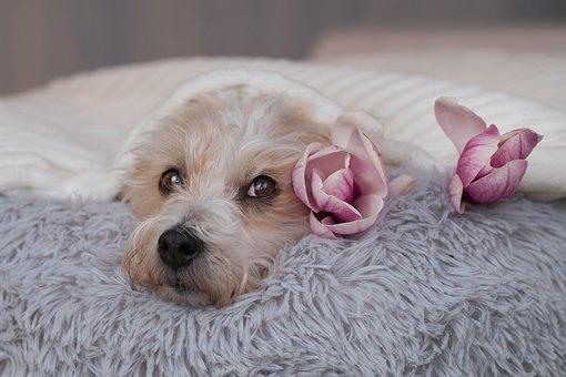 Dog, Head, Flowers, Face, Snout, Pet, Furry, Animal